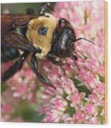 Bumble Bee Macro Wood Print