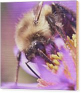 Bumble Bee on Aster Wood Print