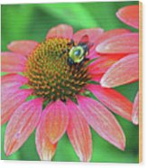 Bumble Bee On Flower Wood Print