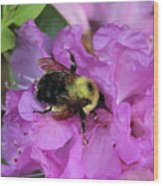 Bumble Bee On Rhododendron Blossoms Wood Print