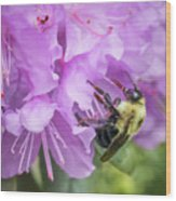 Bumble Bee on Rhododendron Wood Print