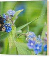 Bumble Bee On Siberian Bugloss Wood Print