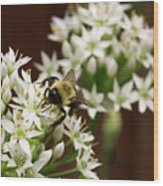 Bumble Bee On Wild Onion Flower Wood Print