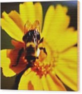 Bumble Bee On Yellow Flower Wood Print