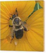 Bumble Bee On Yellow Nasturtium Wood Print