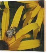 Bumble Bee Sitting On Black-eyed Susan Wood Print