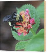 Bumble Bee Square Wood Print