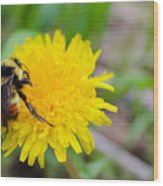 Bumble Bees And Dandelions Wood Print