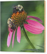 Bumble Bees At Work Wood Print