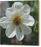 Bumblebee And Bee Wood Print