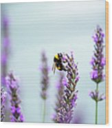 Bumblebee And Lavender Wood Print