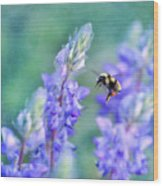Bumblebee And Lupine Wood Print
