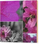 Bumblebee Bonanza Wood Print