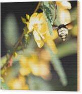 Bumblebee Heading Into Work Wood Print