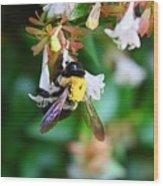Bumblebee On Abelia Wood Print