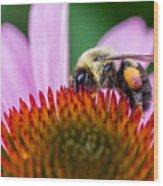 Bumblebee On Coneflower Wood Print