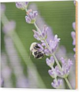 Bumblebee On The Lavender Field 2 Wood Print