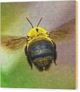 Bumblebees Flight Wood Print
