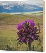 Bumblebee With The Best View Wood Print