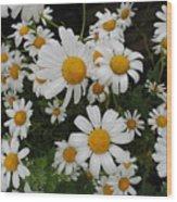 Bunch Of Daisy Wood Print