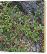Bunchberry Berries Wood Print