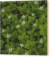 Bunchberry Carpet Wood Print