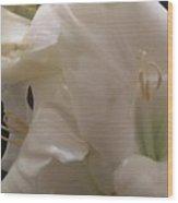 Bundle Of White Wood Print
