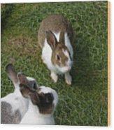 Bunnies Wood Print