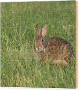 Bunny At Breakfast Wood Print