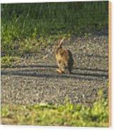 Bunny Eating On The Run Wood Print