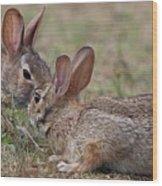 Bunny Encounter Wood Print