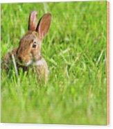 Bunny In Field  Wood Print