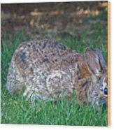 Bunny In The Backyard Wood Print