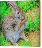 Bunny Secrets Wood Print