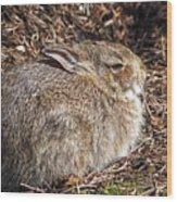 Bunny Siesta Wood Print