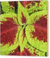 Burgundy And Pea Green Wood Print