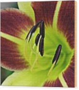 Burgundy And Yellow Lily Wood Print