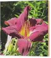 Burgundy Lily Wood Print