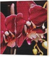 Burgundy Orchids Wood Print
