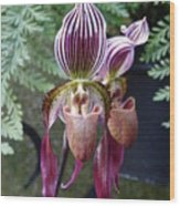 Burgundy Orchids With Stripes Wood Print