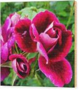 Burgundy Rose And Rose Bud Wood Print