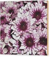 Burgundy White Crysanthemums Wood Print