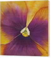Burgundy Yellow Pansy Wood Print