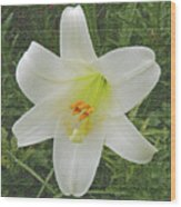 Burlap Textured Easter Lily Wood Print