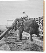 Burma: Elephant Wood Print