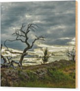 Burmis Tree And Wind Swept Pines Wood Print