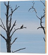Burnt-tree Osprey Wood Print