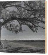 Burr Oak Tree Wood Print