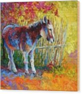 Burro And Bouganvillia Wood Print