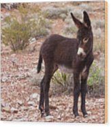 Burro Foal Wood Print